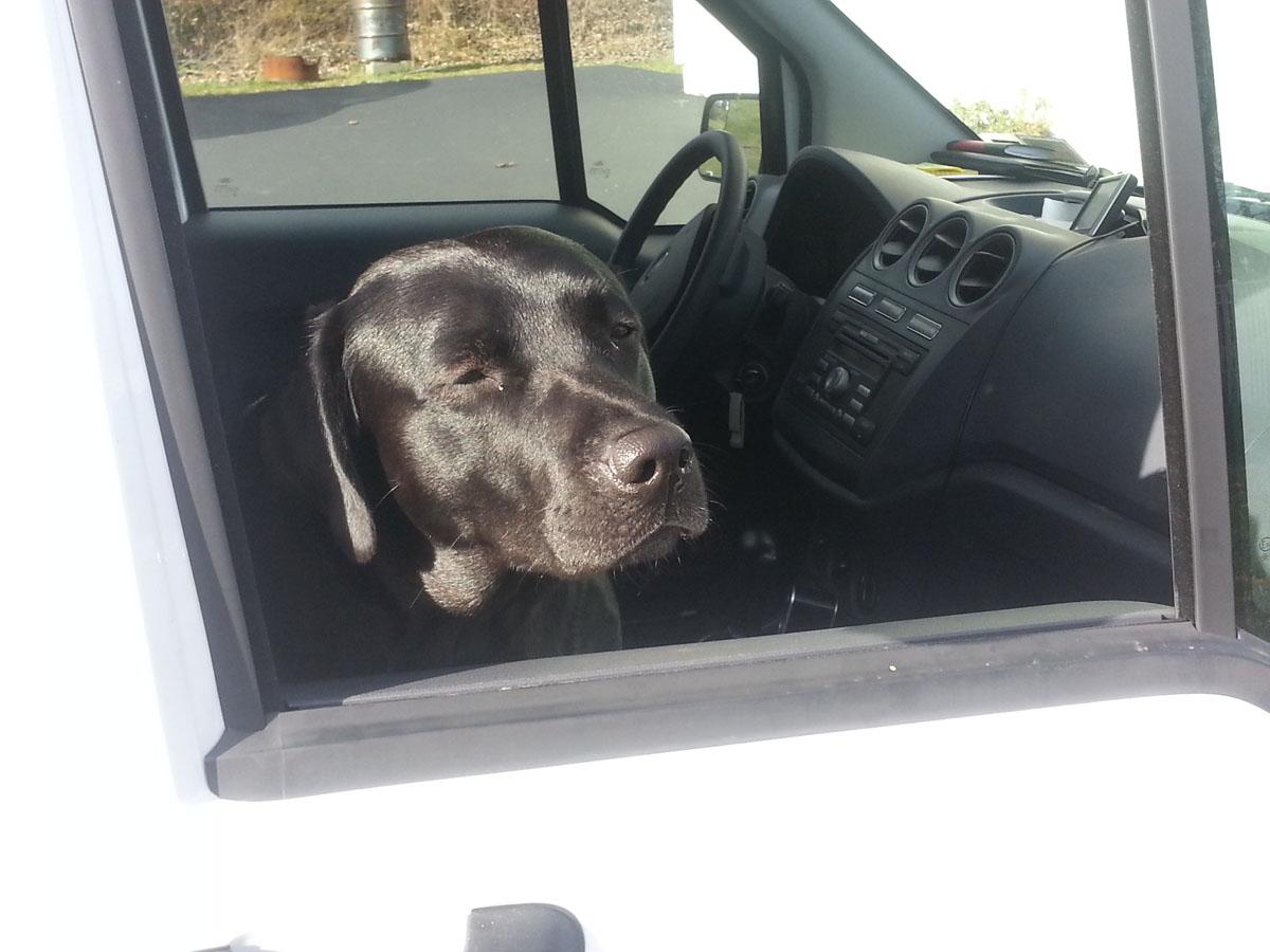 greg-lammon-electrician-dog